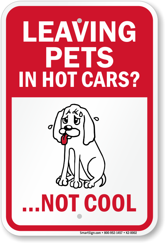 How To Keep A Dog Cool In A Hot Car